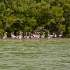The Pink Flamingo Stands in the Ria Celestun, Yucatan, Mexico