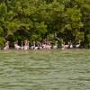 The Pink Flamingo Stands in the Ria Celestun, Yucatan, Mexico