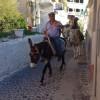 Santorini-Fira-Donkey-Stroll-cZabransky
