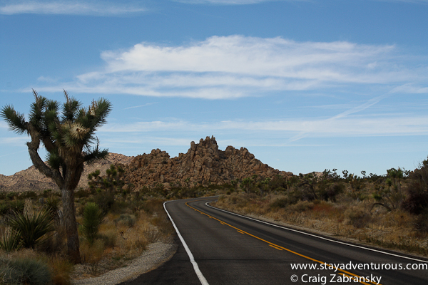 the road inside the joshua tree national park in california, usa.