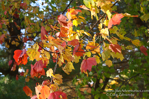 autumn colors in upstate new york 2012