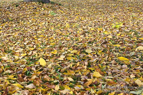 the leaves on the ground in the catskills of New York