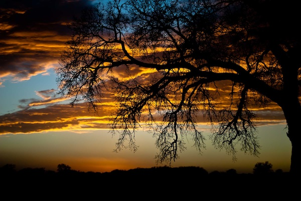 A Oklahoma Sunset - Woodward Sunset by Cindy Viol