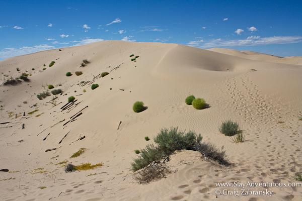 Samalayuca-Sand Dunes in Chihuahua Mexico