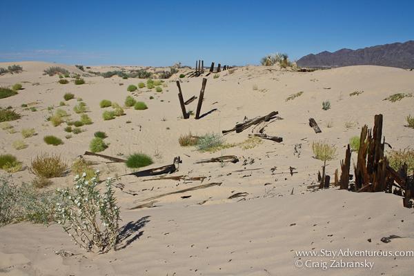 view of the Chihuahua Samalayuca Dessert Sand Dunes