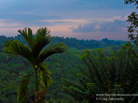 the sunset over the valley in Ubud, Bali, Indonesia