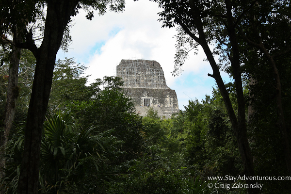 first view of Templo IV at the mayan ruins of Tikal, Guatemala