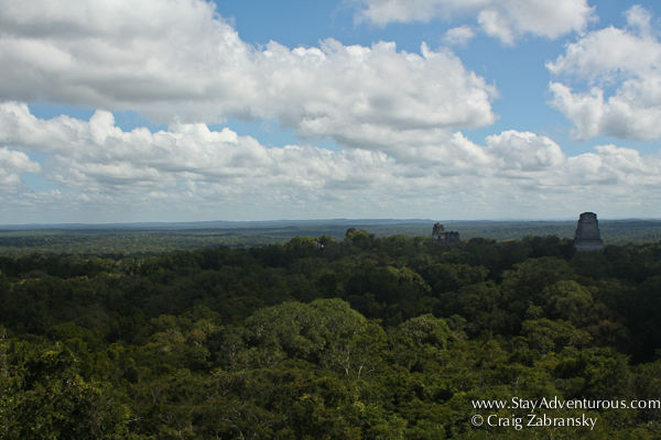 the afternoon view from atop Templo IV at the Mayan Ruins of Tikal in Guatemala