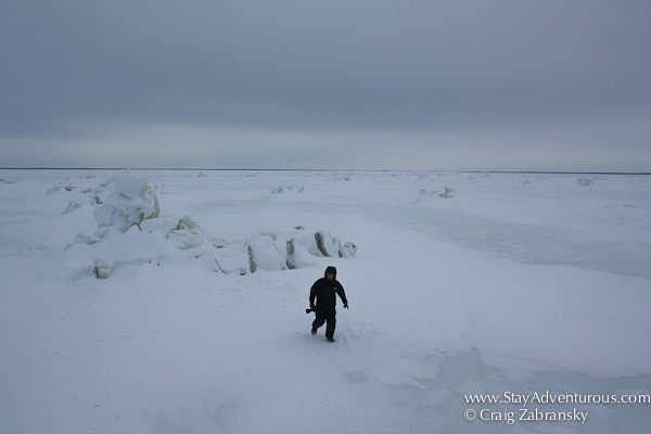 on the churchill river just outside churchill, manitoba, canada in winter a photographer returns to the tundra buggie