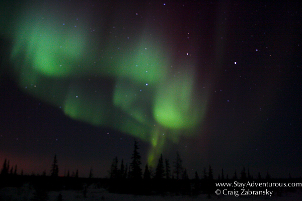 the Northern Lights, the Auora Borealis, from Churchill, Manitoba, Canada