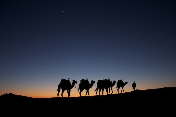 camels at sunset in the sarah desert, a moroccan sunset