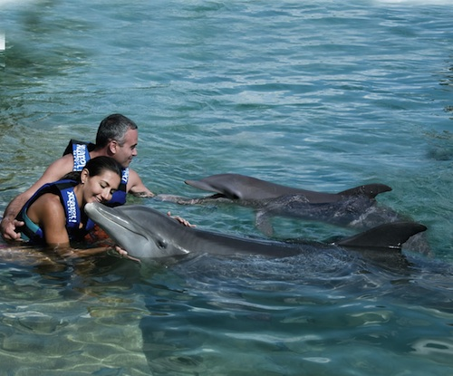 dolphins at Xcaret in Cancun, Mexico