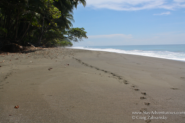 the beautiful beaches on the Osa Peninsula onf Costa Rica