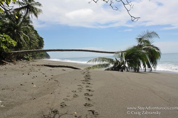 osa penninsula costa rica beach
