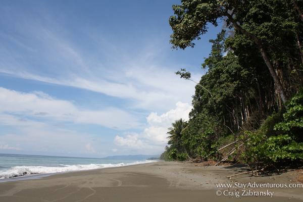 osa peninsula beach costa rica pura vida