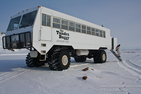 the Tundra Buggy out on an Arctic adventure in Churchill, Manitoba, Canada