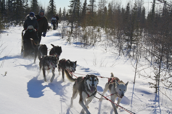 Dog sledding at Wapusk Adventure in Churchill, Manitoba, Canada