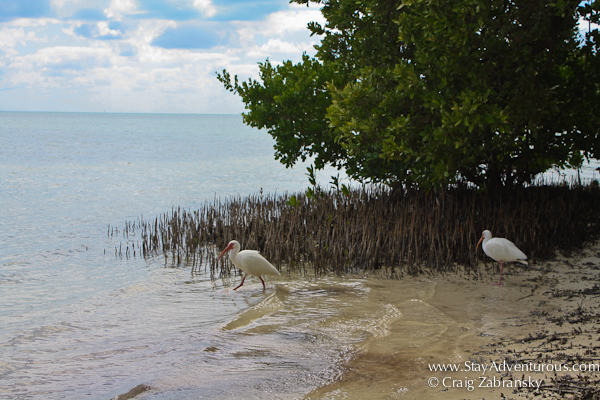 plenty of wild life at Anne's Beach, Florida Keys, Florida