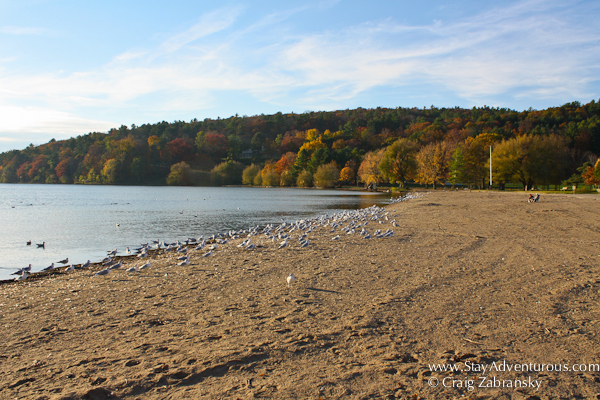 plenty of birds enjoying the sun at the beach in Glimmerglass State Park in Upstate New York