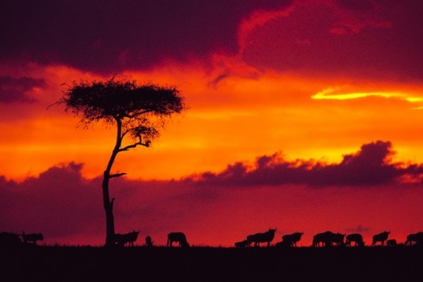sunset in kenya, africa during the migration