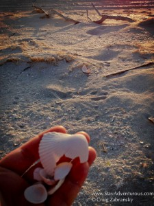 a seashell on the virgin beach along the gulf of Mexico at hotel xixim in celestun, yucatan, mexico