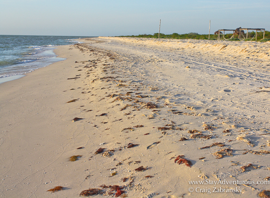 a stretch of the virgin beach along the gulf of Mexico at hotel xixim in celestun, yucatan, mexico
