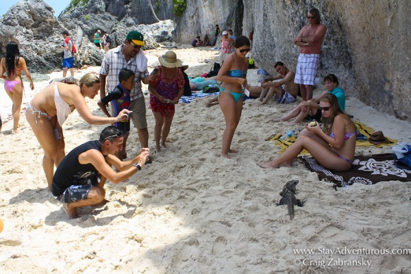 the iguana attracts some people at the mayan ruins of Tulum in Mexico