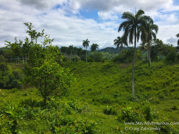 The Reforestation of the Rainforest social impact travel excursion from Fathom Travel in the Dominican Republic