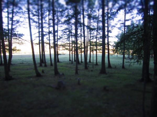 Mongolia - Terelj Park