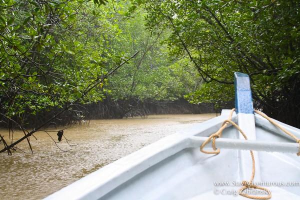 Mangroves-Langkawi-cZabransky