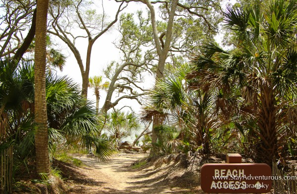 the beach access point from the a boardwalk nature trail at hunting state park near beaufort, south carolina