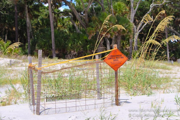 the roped off Loggerhead Turtle Nest inside the beach at Hunting State Park near Beaufort, South Carolina