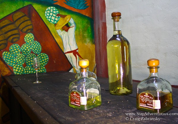 dona engracias tequila tasting in puerto vallarta, mexico