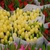 The Floating Flower Market of Amsterdam