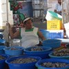 Oysters with a pearl of wisdom in Mazatlan, Mexico