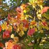 Fall Foliage – Glimmerglass State Park in New York's Catskills