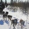 The Five-Arctic Adventures in Churchill Manitoba