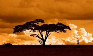 sunset in kenya, africa during a safari. #whyILoveKenya