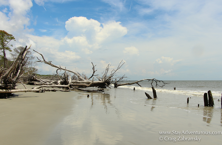 The Trees Part Of Beach Erosion At Hunting State Park Beachin Near Beaufort