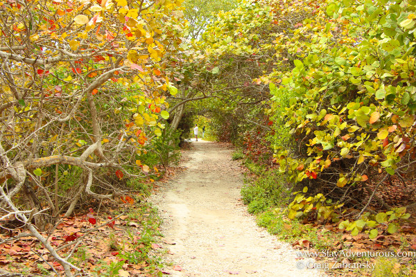 trails inside bahia honda, florida keys