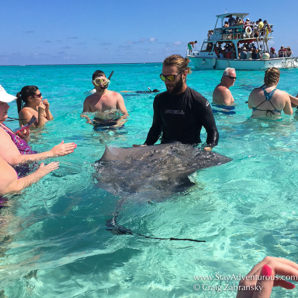 getting in the water with southern Stingrays in Stingray City in the North Sound of Grand Cayman, Western Caribbean