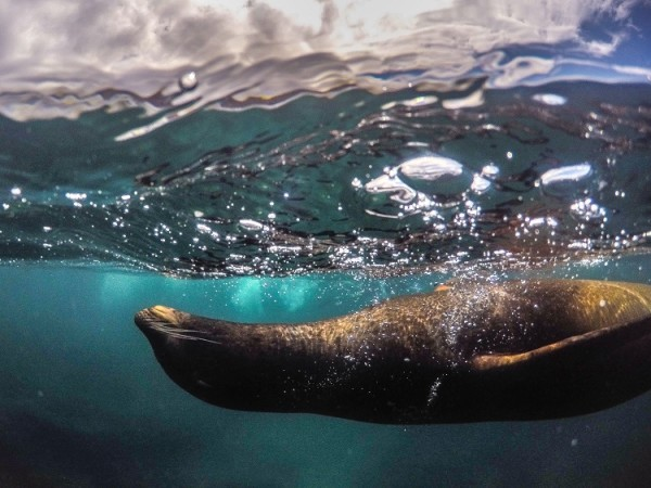 sealion in galapagos islands