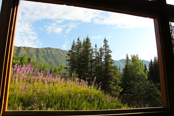 fire weed and the local Alaskan mountains at the Princess lodge in