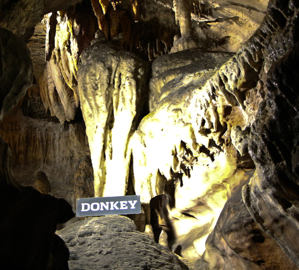 Donkey Ruby Falls Chattanooga Tennessee