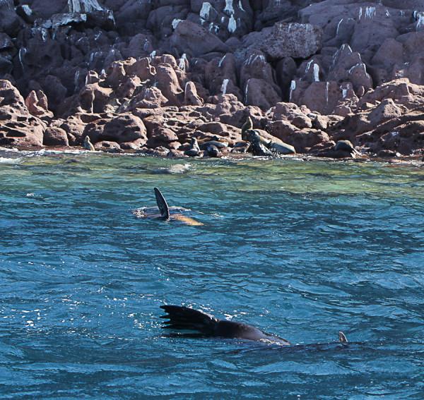 the sea lion colony in La Paz, BCS, Mexico