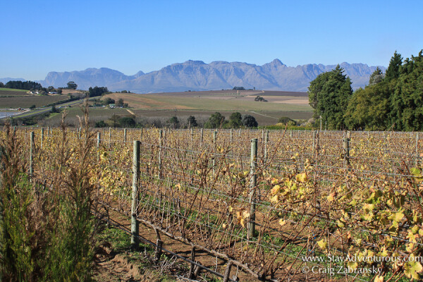 winery Amani located in stellenbosch, south africa