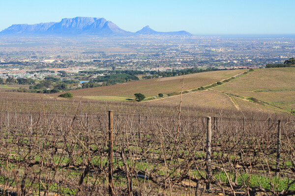vineyards come with a view in stellenbosch, south africa