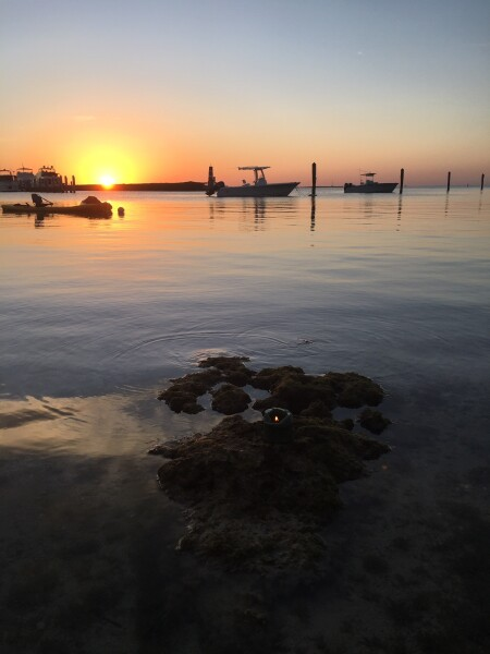 sunset for pascal in islamorada florida keys