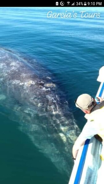 grey whales magdalena Bay Puerto Aldofo Lopez Mateos Baja California Sur, Mexico with Garcia Tours
