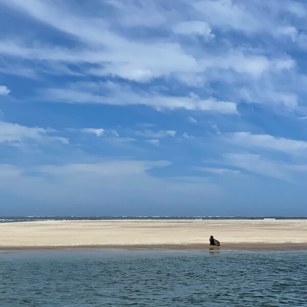 a lone sea lion on the shores of magdalena island in Puerto Adolfo Lopez Mateos Baja California Sur, Mexico